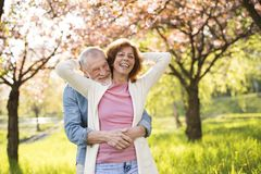Beautiful senior couple in love outside in spring nature. Stock Image