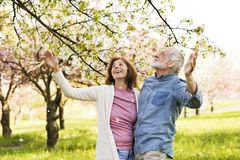 Beautiful senior couple in love outside in spring nature. Royalty Free Stock Photo