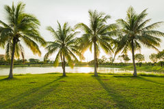 Beautiful senset at green park landscape with grassfield. And coconut tree palm Stock Photo
