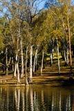 Beautiful serene lake. Beautiful view of a serene lake in Mina de São Domingos, Portugal Royalty Free Stock Image