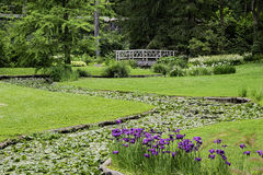 Beautiful, serene scene in a park in summer Royalty Free Stock Photos