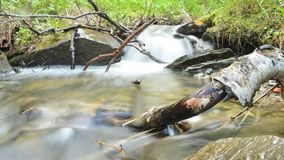 Beautiful serene small mountain creek waterfall in lush summer forest, timelapse photo stock footage