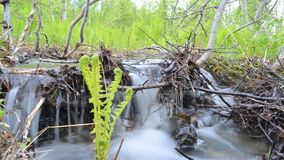 Beautiful serene small mountain creek waterfall in lush summer forest, timelapse video stock video footage