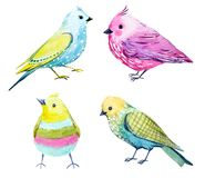 Watercolor bird set. Beautiful set with four watercolor hand drawn colorful birds Royalty Free Stock Photography