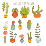 Beautiful set of hand drawn houseplants Royalty Free Stock Image