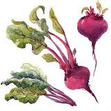 Watercolor beet set Stock Photo