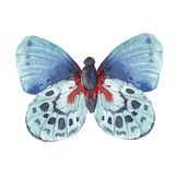 Watercolor butterflies set Royalty Free Stock Images