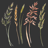 Wild field grass set. Beautiful set with hand drawn watercolor wild field grass Stock Photography
