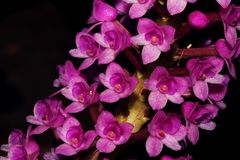 Beautiful set of orchid flower. Macrophoto of micro orchid flowers royalty free stock photo