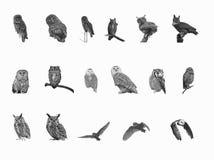 Beautiful set of owls on white background Royalty Free Stock Image