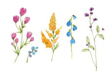 Watercolor floral set. Beautiful set with watercolor hand drawn spring flowers Royalty Free Stock Image