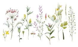 Watercolor floral set. Beautiful set with watercolor wild field summer flowers Stock Image
