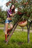 Beautiful sexy woman picking apples Royalty Free Stock Images