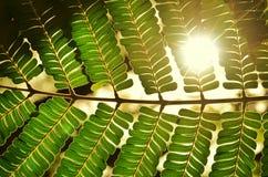 Beautiful shade stock image