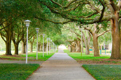 Beautiful shaded sidewalk with a lush green tree canopy Royalty Free Stock Photo