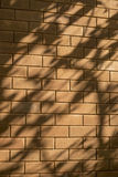 Beautiful shadow drop of a leave and branch on red brick wall royalty free stock photo