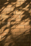 Beautiful shadow drop of a leave and branch on red brick wall. Stock Images