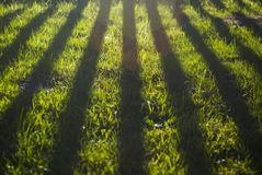 Beautiful shadows on home garden grass. Sunset light. stock photography