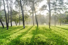 Beautiful shadows of trees on green grass in park royalty free stock images