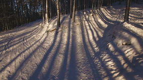 Beautiful shadows from the trees on the snow stock video footage