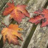 Beautiful shallow depth of field macro image of colorful Autumn Stock Photo