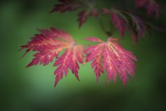 Beautiful shallow depth of field macro image of colorful Autumn Royalty Free Stock Photography