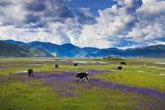 Beautiful shangri-la Royalty Free Stock Photo