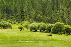 Beautiful shangri-la grassland pastures Stock Image