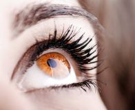 Beautiful shape of female eye Stock Images