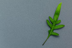 Beautiful shape of fern leaves flat lay on gray background. Gree Stock Photos