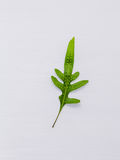 Beautiful shape of fern leaves flat lay on white wooden backgrou Royalty Free Stock Images