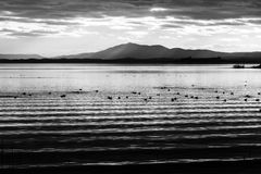Beautiful and sharp water ripples on Trasimeno lake Umbria, Italy at sunset, with ducks and distant hills. Beautiful and sharp water ripples on Trasimeno lake Royalty Free Stock Images