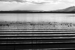 Beautiful and sharp water ripples on Trasimeno lake Umbria, Italy at sunset, with ducks and distant hills. Beautiful and sharp water ripples on Trasimeno lake Stock Photography