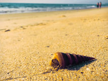Beautiful shell on the beach near the blue sea, soft focus, pyramid shell with crab. Spiral shell, sea animal, beach life, seaside scene, sand and shell Royalty Free Stock Photo