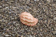 Beautiful shell closeup on wet peeble, natural background Stock Photo