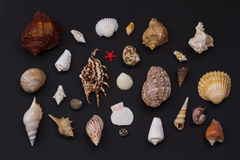 Beautiful shell. Royalty Free Stock Images