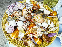Beautiful shell at market Royalty Free Stock Photography