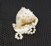Beautiful shell with pearl beads Royalty Free Stock Image