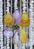 Beautiful shell. S for decorating  home or office Stock Photography