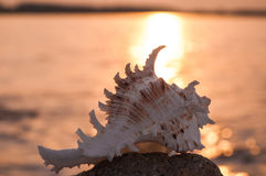Beautiful shell in stone royalty free stock photography