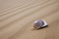 Beautiful shells Royalty Free Stock Photo