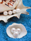 Beautiful Shells And Pearls Stock Images