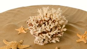 Beautiful shells and coral on sand against, white, rotatiion stock video