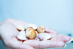 Beautiful Shells in a Hand Royalty Free Stock Photos