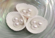 Beautiful shells and pearls Royalty Free Stock Photo