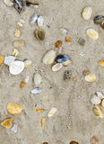 Beautiful shells at the sandy beach Royalty Free Stock Image