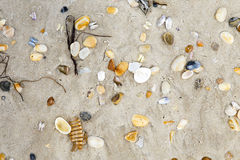 Beautiful shells at the sandy beach Royalty Free Stock Photos