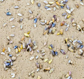 Beautiful shells at the sandy beach Stock Image