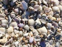 Shells on Beach in Sunshine stock photography