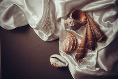 Beautiful shells on white silk drapery Stock Photography